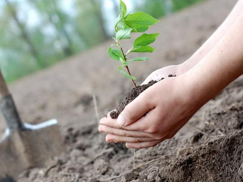 Посади дерево в своем дворе!